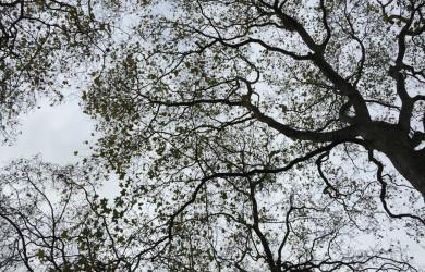 Festa degli alberi a Portoferraio